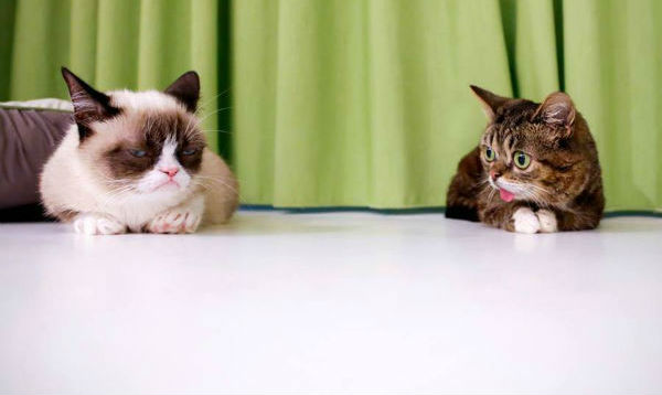 Grumpy-Cat-Picture